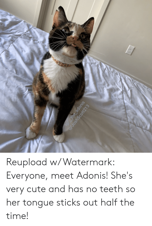 Cute, Time, and Sticks: ig/ the_adonis  u/JoshScott213 Reupload w/ Watermark: Everyone, meet Adonis! She's very cute and has no teeth so her tongue sticks out half the time!
