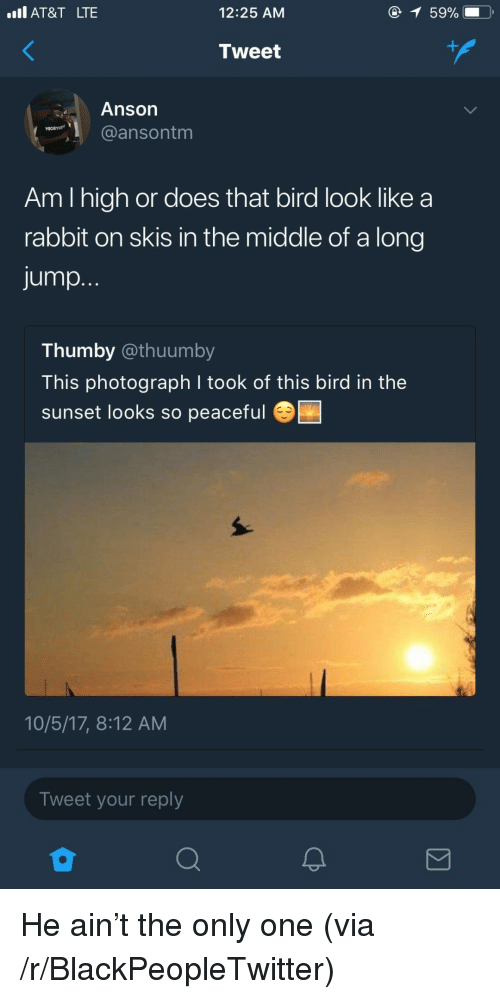 skis: Il AT&T LTE  12:25 AM  Tweet  Anson  @ansontm  Am I high or does that bird look like a  rabbit on skis in the middle of a long  jump.  Thumby @thuumby  This photograph I took of this bird in the  sunset looks so peaceful  10/5/17, 8:12 AM  Tweet your reply <p>He ain't the only one (via /r/BlackPeopleTwitter)</p>