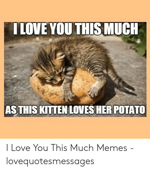 Lovequotesmessages: ILOVE YOU THIS MUCH  AS THIS KITTEN LOVES HER POTATO I Love You This Much Memes - lovequotesmessages