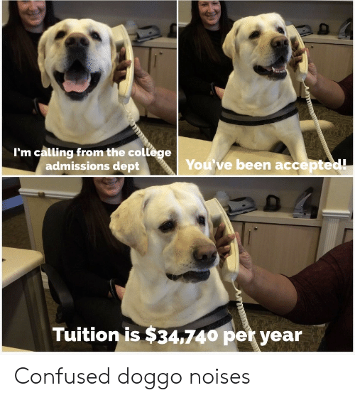Dept: I'm calling from the college  admissions dept  You've been accepted!  Tuition is $34,740 per year Confused doggo noises