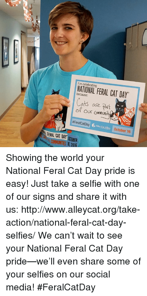 alley cats: I'm celebrating  because  FERAL CAT DAY  ats are  #Feral CatDay  Alley Cat Allies October 16  ARRAL CAT DAY  ONIOBER Showing the world your National Feral Cat Day pride is easy! Just take a selfie with one of our signs and share it with us: http://www.alleycat.org/take-action/national-feral-cat-day-selfies/    We can't wait to see your National Feral Cat Day pride—we'll even share some of your selfies on our social media! #FeralCatDay