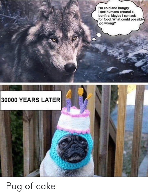 Food, Hungry, and Cake: I'm cold and hungry.  I see humans around a  bonfire. Maybe I can ask  for food. What could possibly  go wrong?  30000 YEARS LATER Pug of cake