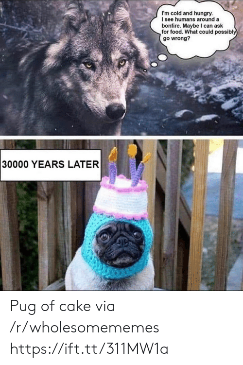 Food, Hungry, and Cake: I'm cold and hungry.  I see humans around a  bonfire. Maybe I can ask  for food. What could possibly  go wrong?  30000 YEARS LATER Pug of cake via /r/wholesomememes https://ift.tt/311MW1a