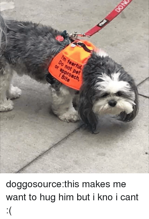 Target, Tumblr, and Blog: Im fearful  Do  not pet  or approach  1 Bite doggosource:this makes me want to hug him but i kno i cant :(