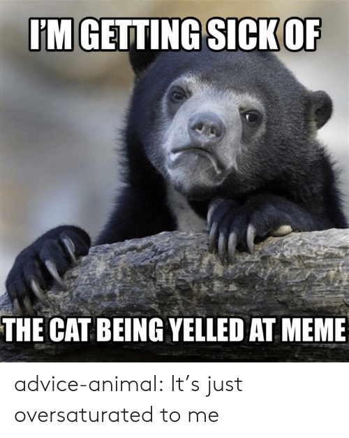 Advice, Meme, and Tumblr: IM GETTING SICK OF  THE CAT BEING YELLED AT MEME advice-animal:  It's just oversaturated to me