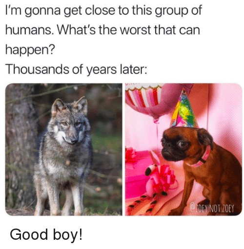 zoey: I'm gonna get close to this group of  humans. What's the worst that can  happen?  Thousands of years later:  1OE NOT.ZOEY Good boy!