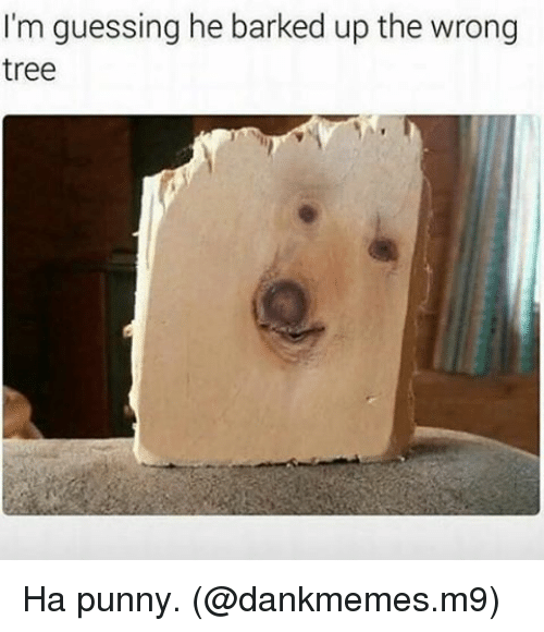 Memes, 🤖, and  Barking: I'm guessing he barked up the wrong  tree Ha punny. (@dankmemes.m9)