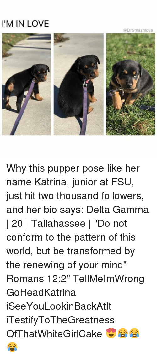 """FSU Florida State University: I'M IN LOVE  @DrSmas hlove Why this pupper pose like her name Katrina, junior at FSU, just hit two thousand followers, and her bio says: Delta Gamma   20   Tallahassee   """"Do not conform to the pattern of this world, but be transformed by the renewing of your mind"""" Romans 12:2"""" TellMeImWrong GoHeadKatrina iSeeYouLookinBackAtIt iTestifyToTheGreatness OfThatWhiteGirlCake 😍😂😂😂"""