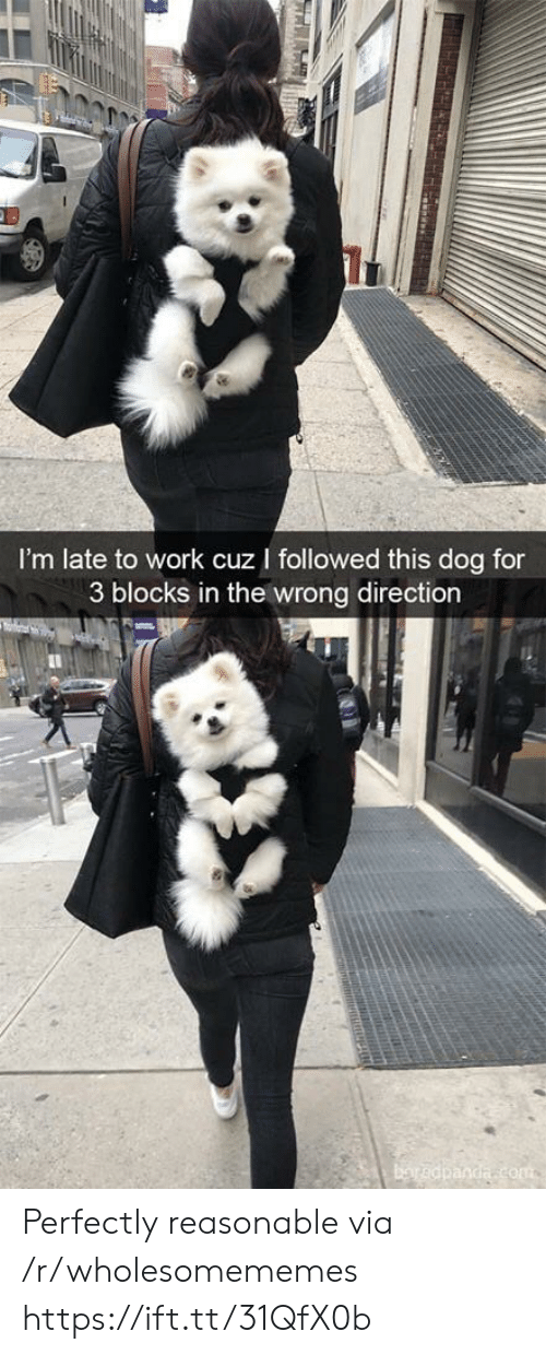 Blocks: I'm late to work cuz I followed this dog for  3 blocks in the wrong direction  baredpanda com  TRRAH Perfectly reasonable via /r/wholesomememes https://ift.tt/31QfX0b