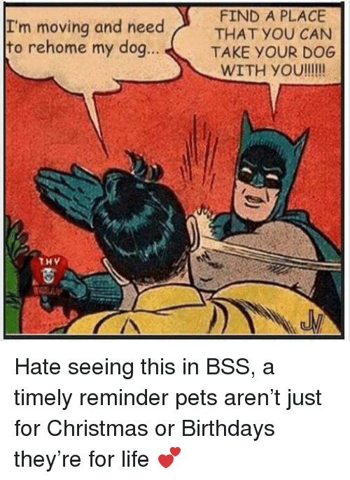 Christmas, Life, and Memes: I'm moving and need  to rehome my dog.  FIND A PLACE  THAT YOU CAN  TAKE YOUR DOG  WITH YOu!!!!  ..  THy  /A Hate seeing this in BSS, a timely reminder pets aren't just for Christmas or Birthdays they're for life 💕