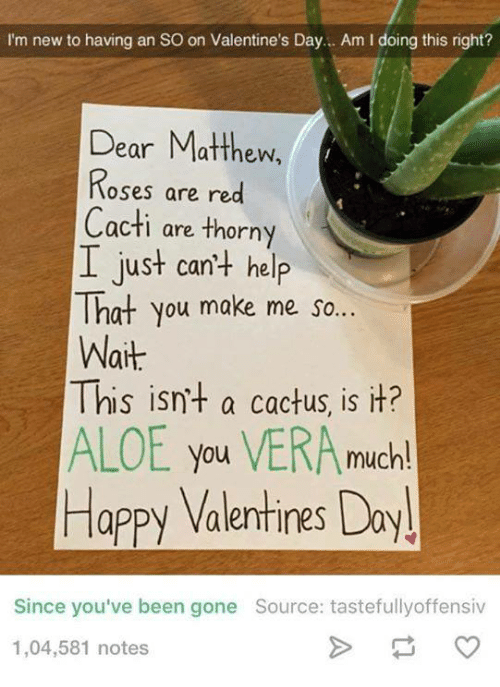 Cactie: I'm new to having an so on Valentine's Day... Am l doing this right?  Dear Matthew,  Roses are red  Cacti are thorny  I just can't help  That you make me so...  Wait  This isn't a cactus, is it?  ALOE you VERA much!  Happy Valentines Day!  Since you've been gone Source: tastefully offensiv  1,04,581 notes