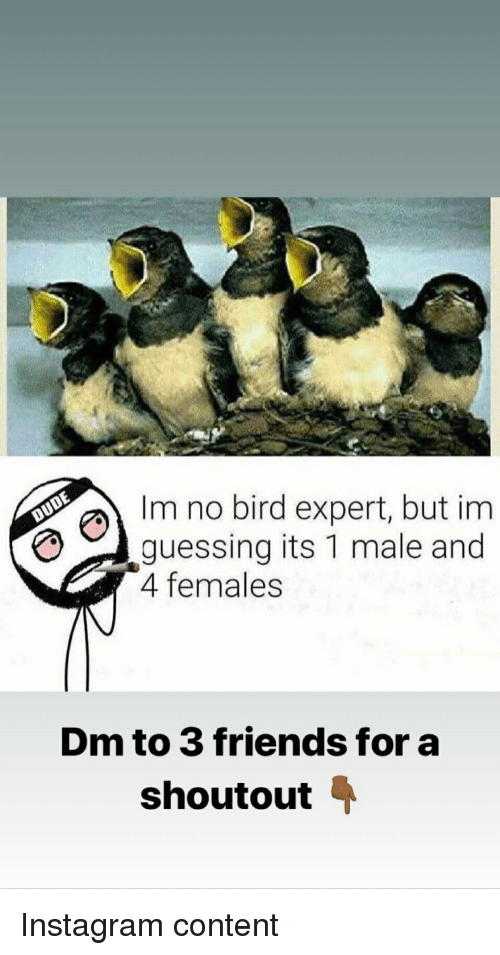 Friends, Instagram, and Content: Im no bird expert, but im  guessing its 1 male and  4 femaless  Dm to 3 friends for a  shoutout