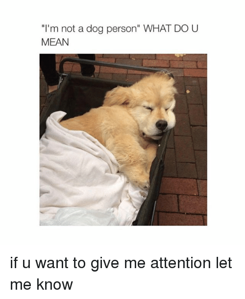 Give Me Attention