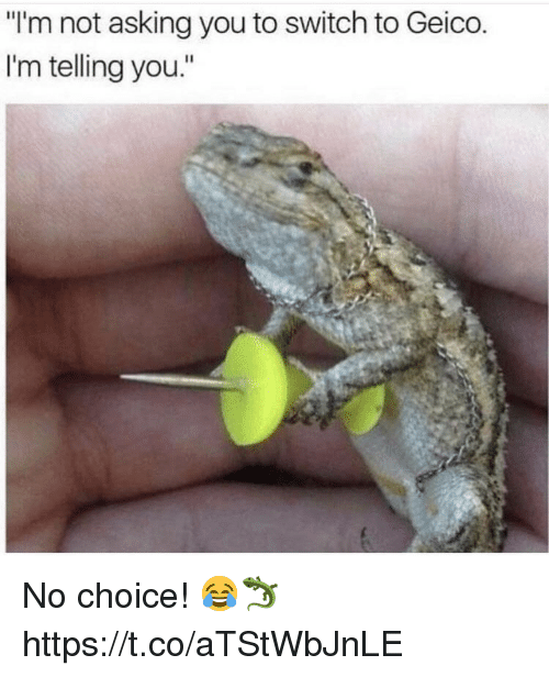 "Asking, Geico, and Switch: ""I'm not asking you to switch to Geico  I'm telling you."" No choice! 😂🦎 https://t.co/aTStWbJnLE"