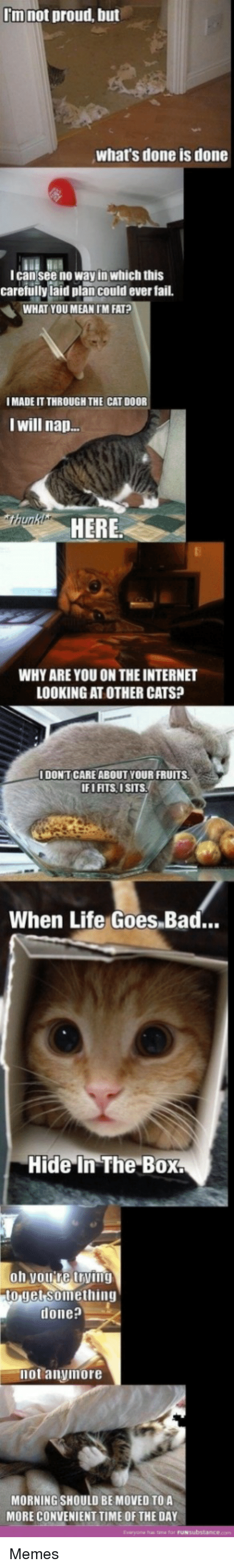 Bad, Cats, and Fail: I'm not proud, but  what's done is done  lcan see no way in which this  carefullyiaid plan could ever fail.  WHAT YOU MEAN IM FAT?  I MADE IT THROUGH THE CAT DOOR  I will nap.  HERE  WHY ARE YOU ON THE INTERNET  LOOKING AT OTHER CATS?  I DONTCARE ABOUT YOUR FRUITS  IFI FITS, 1SITS  When Life Goes.Bad..  Hide In The Box  o jet Soimething  done?  not anyimore  MORNING SHOULD BE MOVED TO A  MORE CONVENIENT TIME OF THE DAY  Eviryona has tane for Memes