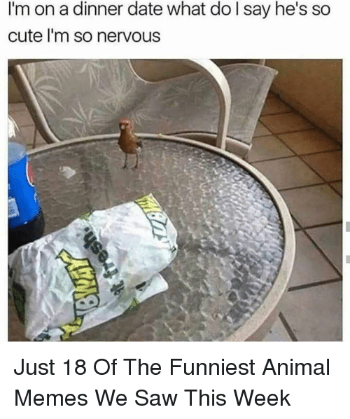 Cute, Memes, and Saw: I'm on a dinner date what do l say he's so  cute l'm so nervous Just 18 Of The Funniest Animal Memes We Saw This Week