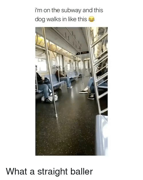 dogging: im on the subway and this  dog walks in like this What a straight baller