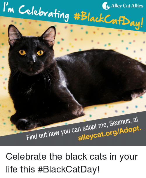 alley cats: I'm rating  #BlackcafDay!  Alley Cat Allies  Find out how you can adopt me, Seamus, at Celebrate the black cats in your life this #BlackCatDay!