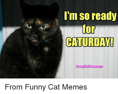 Funny Kid Friendly Cat Memes : I m so ready for caturday unn from funny cat memes cats meme on
