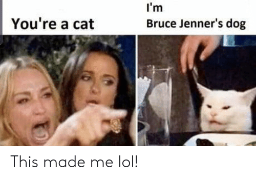 Lol, Dog, and Cat: I'm  You're a cat  Bruce Jenner's dog This made me lol!