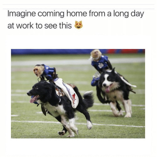Work, Home, and Coming Home: Imagine coming home from a long day  at work to see this