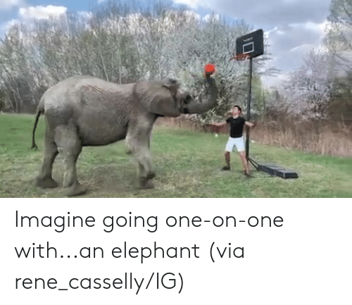 Elephant, One, and Via: Imagine going one-on-one with...an elephant  (via rene_casselly/IG)