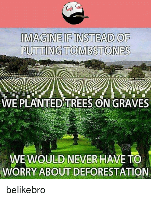 deforestation: IMAGINE IF INSTEAD OF  PUTTING TOMBSTONES  WE PLANTED TREES ON GRAVES  WE WOULD NEVER HAVE TO  WORRY ABOUT DEFORESTATION belikebro