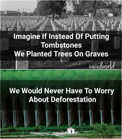 deforestation: Imagine If Instead Of Putting  Tombstones  We Planted Trees On Graves  We Would Never Have To Worry  About Deforestation