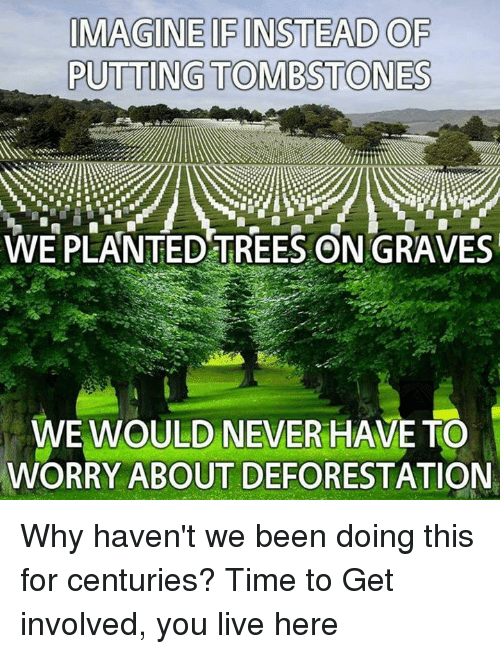 deforestation: IMAGINE IFINSTEAD OF  PUTTING TOMB STONES  WE PLANTED TREES ON GRAVES  WE WOULD NEVER HAVE TO  WORRY ABOUT DEFORESTATION Why haven't we been doing this for centuries?   Time to Get involved, you live here