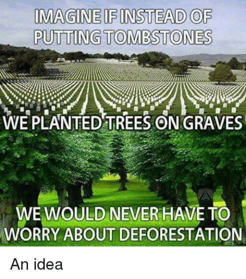 deforestation: IMAGINE IFINSTEAD OF  PUTTING TOMB STONES  WE PLANTED TREES ON GRAVES  WE WOULD NEVER HAVE TO  WORRY ABOUT DEFORESTATION An idea