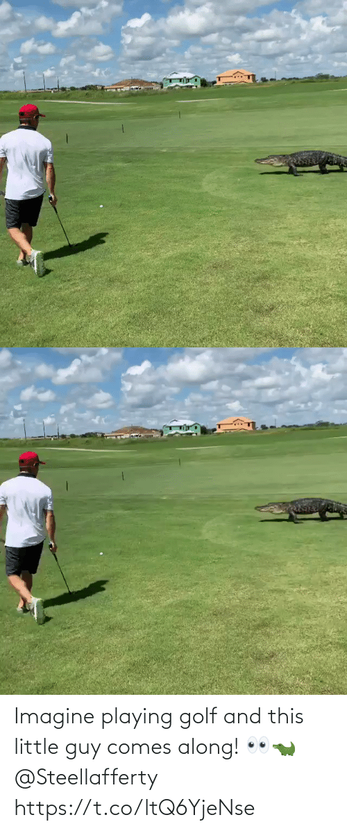 imagine: Imagine playing golf and this little guy comes along! 👀🐊 @Steellafferty https://t.co/ltQ6YjeNse
