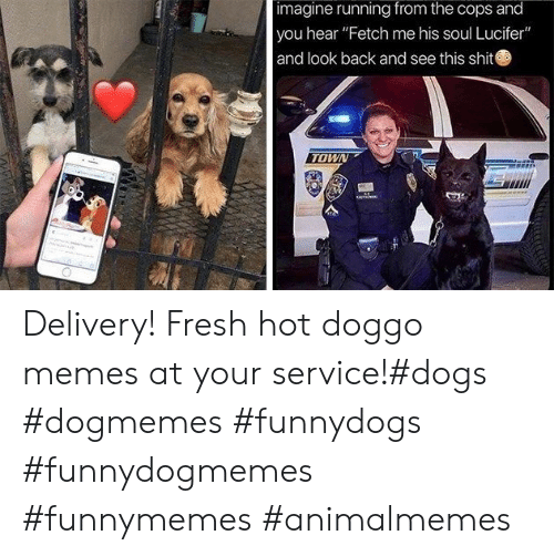"fetch: imagine running from the cops and  you hear ""Fetch me his soul Lucifer""  and look back and see this shit  TOWN Delivery! Fresh hot doggo memes at your service!#dogs #dogmemes #funnydogs #funnydogmemes #funnymemes #animalmemes"