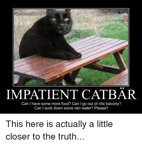 impatient cat bar can i have some more food can 4916770 ✅ 25 best memes about brother may i have some oats brother may i