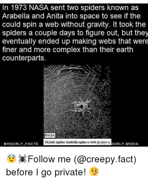 Anita: In 1973 NASA sent two spiders known as  Arabella and Anita into space to see if the  could spin a web without gravity. It took the  spiders a couple days to figure out, but they  eventually ended up making webs that were  finer and more complex than their earth  counterparts.  NASA  Skylab spider Arabella spins a web nzero-.  HOURLYFACTS  URLY MEDIA  - 😨🕷Follow me (@creepy.fact) before I go private! 🤒