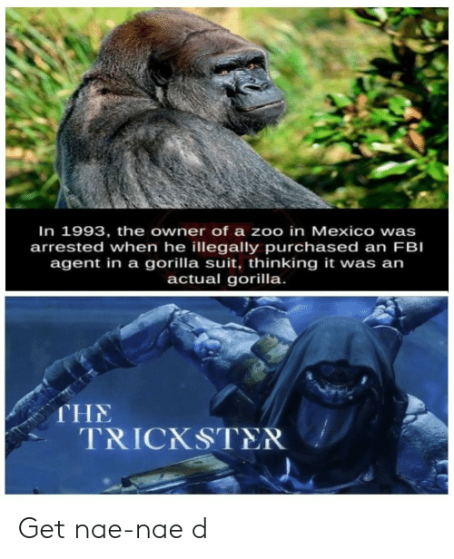 gorilla: In 1993, the owner of a zoo in Mexico wa  arrested when he illegally purchased an FBI  agent in a gorilla suit, thinking it was an  actual gorilla.  s  THE  TRICKSTER Get nae-nae d