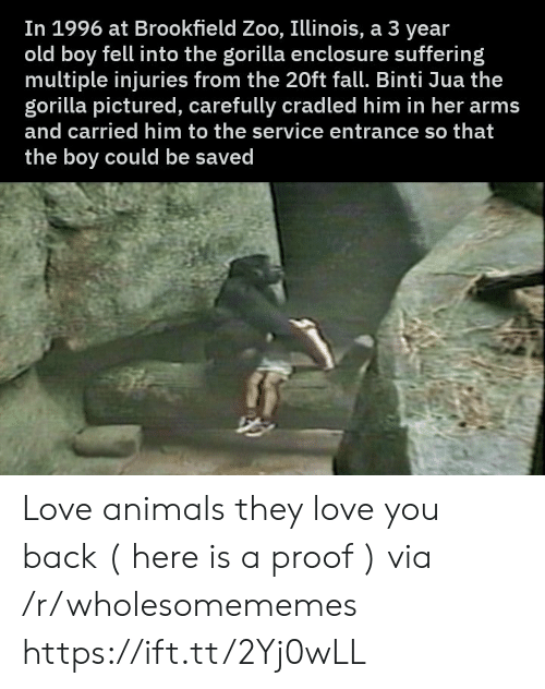 Animals, Fall, and Love: In 1996 at Brookfield Zoo, Illinois, a 3 year  old boy fell into the gorilla enclosu re suffering  multiple injuries from the 20ft fall. Binti Jua the  gorilla pictured, carefully cradled him in her arms  and carried him to the service entrance so that  the boy could be saved Love animals they love you back ( here is a proof ) via /r/wholesomememes https://ift.tt/2Yj0wLL
