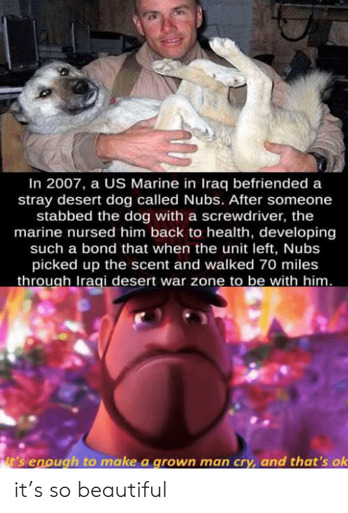 marine: In 2007, a US Marine in Iraq befriended a  stray desert dog called Nubs. After someone  stabbed the dog with a screwdriver, the  marine nursed him back to health, developing  such a bond that when the unit left, Nubs  picked up the scent and walked 70 miles  through Iraqi desert war zone to be with him.  it's enough to make a grown man cry, and that's ok it's so beautiful