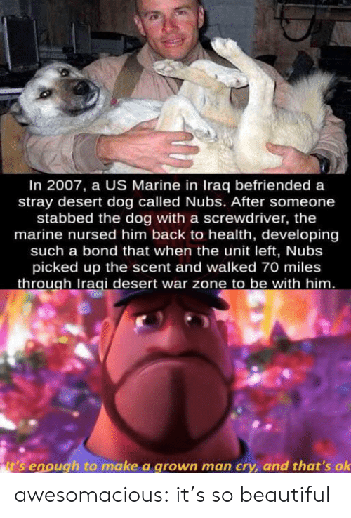 marine: In 2007, a US Marine in Iraq befriended a  stray desert dog called Nubs. After someone  stabbed the dog with a screwdriver, the  marine nursed him back to health, developing  such a bond that when the unit left, Nubs  picked up the scent and walked 70 miles  through Iraqi desert war zone to be with him.  it's enough to make a grown man cry, and that's ok awesomacious:  it's so beautiful