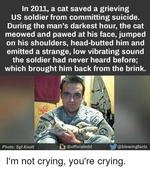 brink: In 2011, a cat saved a grieving  US soldier from committing suicide.  During the man's darkest hour, the cat  meowed and pawed at his face, jumped  on his shoulders, head-butted him and  emitted a strange, low vibrating sound  the soldier had never heard before;  which brought him back from the brink.  Photo: Sgt Knott  @officialmbf  @blowingfactz I'm not crying, you're crying.