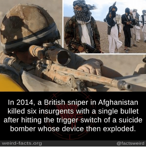 Suicide Bomber: In 2014, a British sniper in Afghanistan  killed six insurgents with a single bullet  after hitting the trigger switch of a suicide  bomber whose device then exploded.  weird-facts.org  @factsweird