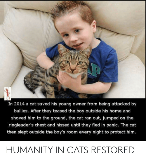 slept: In 2014 a cat saved his young owner from being attacked by  bullies. After they teased the boy outside his home and  shoved him to the ground, the cat ran out, jumped on the  ringleader's chest and hissed until they fled in panic. The cat  then slept outside the boy's room every night to protect him. HUMANITY IN CATS RESTORED