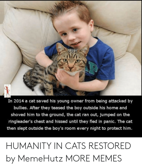slept: In 2014 a cat saved his young owner from being attacked by  bullies. After they teased the boy outside his home and  shoved him to the ground, the cat ran out, jumped on the  ringleader's chest and hissed until they fled in panic. The cat  then slept outside the boy's room every night to protect him. HUMANITY IN CATS RESTORED by MemeHutz MORE MEMES