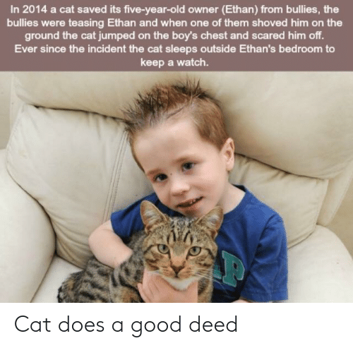teasing: In 2014 a cat saved its five-year-old owner (Ethan) from bullies, the  bullies were teasing Ethan and when one of them shoved him on the  ground the cat jumped on the boy's chest and scared him off.  Ever since the incident the cat sleeps outside Ethan's bedroom to  keep a watch. Cat does a good deed