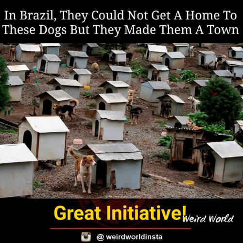 Dogs, Memes, and Brazil: In Brazil, They Could Not Get A Home To  These Dogs But They Made Them A Town  Bi  Great Initiativeeid woda  @ weirdworldinsta