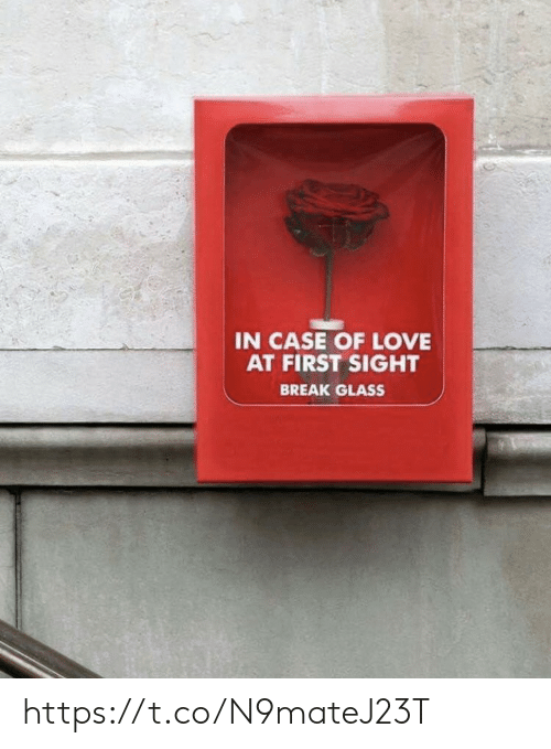Love, Memes, and Break: IN CASE OF LOVE  AT FIRST SIGHT  BREAK GLASS https://t.co/N9mateJ23T