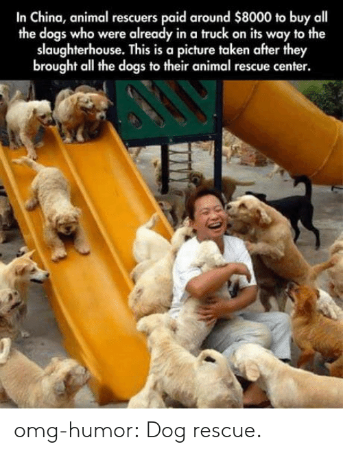 Dogs, Omg, and Taken: In China, animal rescuers paid around $8000 to buy all  the dogs who were already in a truck on its way to the  slaughterhouse. This is a picture taken after they  brought all the dogs to their animal rescue center. omg-humor:  Dog rescue.
