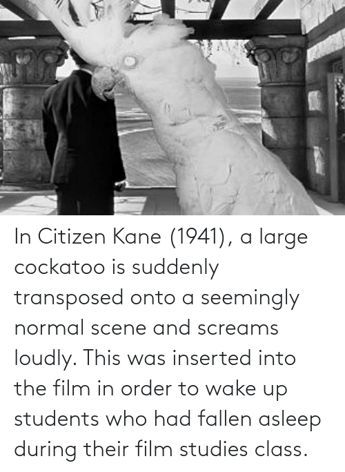 seemingly: In Citizen Kane (1941), a large cockatoo is suddenly transposed onto a seemingly normal scene and screams loudly. This was inserted into the film in order to wake up students who had fallen asleep during their film studies class.