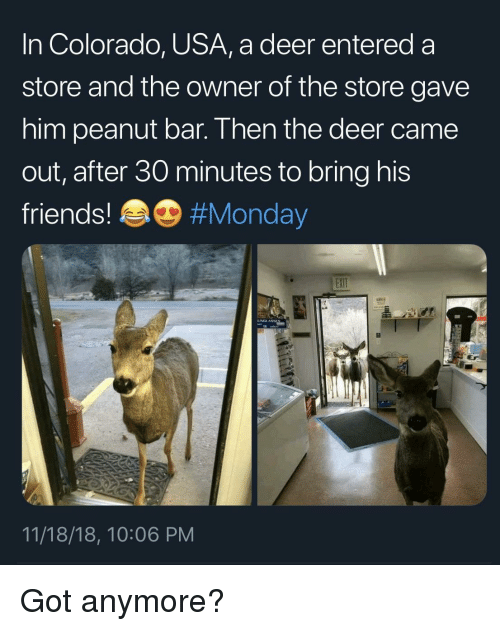 Deer, Friends, and Colorado: In Colorado, USA, a deer entered a  store and the owner of the store gave  him peanut bar. Then the deer came  out, after 30 minutes to bring his  friends! #Monday  11/18/18, 10:06 PM Got anymore?