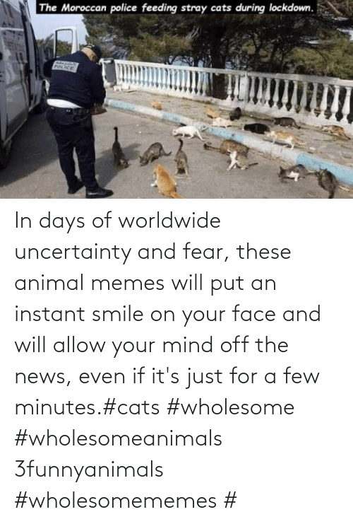 Smile: In days of worldwide uncertainty and fear, these animal memes will put an instant smile on your face and will allow your mind off the news, even if it's just for a few minutes.#cats #wholesome #wholesomeanimals 3funnyanimals #wholesomememes #