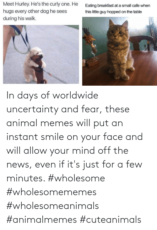 your face: In days of worldwide uncertainty and fear, these animal memes will put an instant smile on your face and will allow your mind off the news, even if it's just for a few minutes. #wholesome #wholesomememes #wholesomeanimals #animalmemes #cuteanimals
